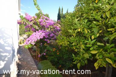Apartments 8142 Croatia - Dalmatia - Island Brac - Splitska - apartment #4986 Picture 3
